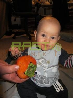 how to eat a persimmon rojo brillante